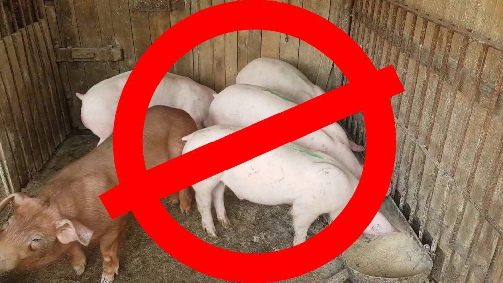 Bruxelles: Exportul cărnii de porc, interzis din patru județe din România